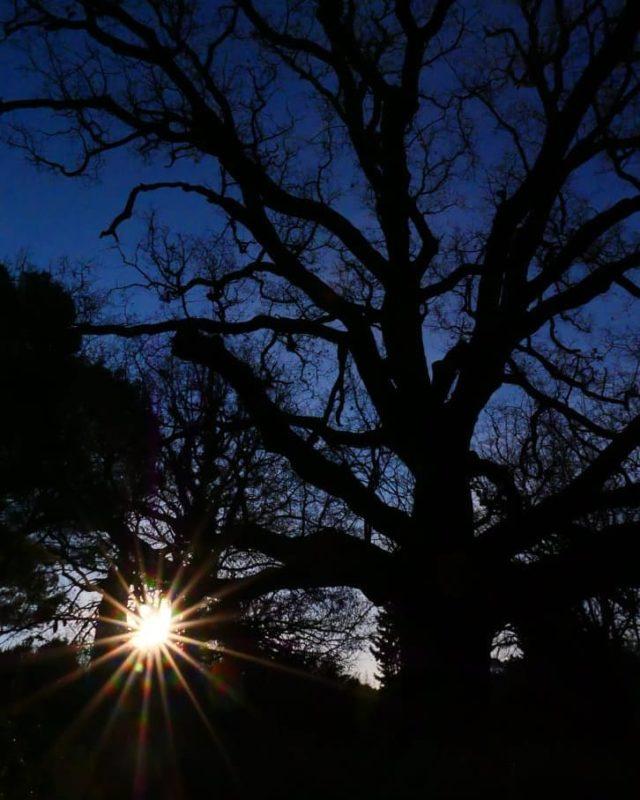 """Un nouveau jour commence au Manoir de l'Etang et selon un proverbe islandais : """"on doit honorer le chêne sous lequel on habite."""" À méditer... 🌿 Excellent week-end à tous 🌿 Réservations & informations par mail ➡️ manoir.etang@wanadoo.fr / Rdv sur notre site ➡️ www.manoir-de-letang.com . . . . . Merci pour cette superbe photo @kahuete14 @mouginspourvous  #manoirdeletang #manoirdeletangmougins #hotel #luxuryhotel #boutiquehotel  #restaurant #holiday #vacation #mougins #france #cotedazur #frenchriviera #southoffrance #luxury #restaurant #frenchrestaurant #restaurantmougins #food #instafood #foodporn #traveltheworld #travel #travelblog #travelgram #tourism #hotellife #photography #hotelphotography #manor #photography #chêne"""